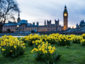 Daffodils set the standard for end of life care
